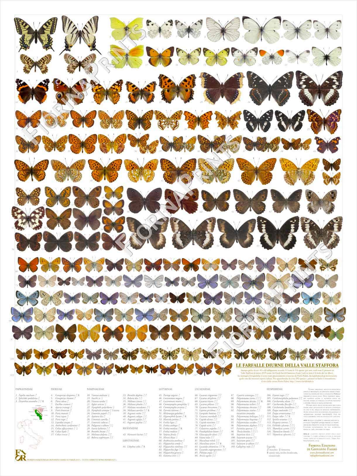 03z-web-stampa-farfalle-valle-staffora-web.jpg