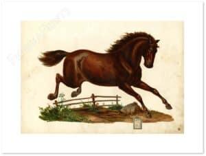 cavallo-al-galoppo-shadow.jpg
