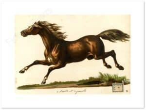 cavallo-biondo-al-galoppo-shadow.jpg