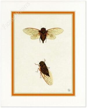 cicala-comune-da-caspar-stoll.jpg