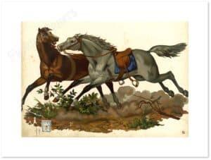 coppia-cavalli-al-galoppo-shadow.jpg