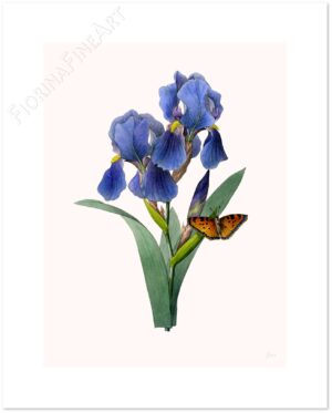 iris-pascal-shadow.jpg