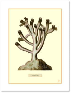 martinet-corals-2-shadow.jpg