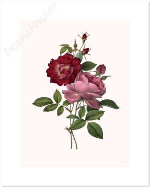 rosa-bengala-shadow.jpg