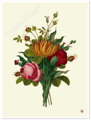 tulipani-rose-shadow.jpg